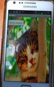 Katzen-App
