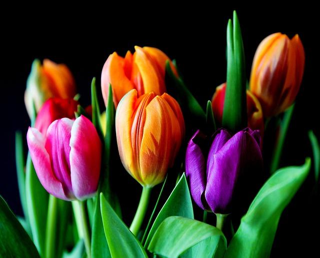 Blumen im Alstertal